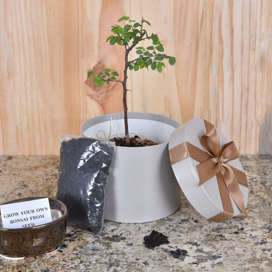 Baby Announcements Grow-Your-Own-Bonsai-Gift-Hamper-World