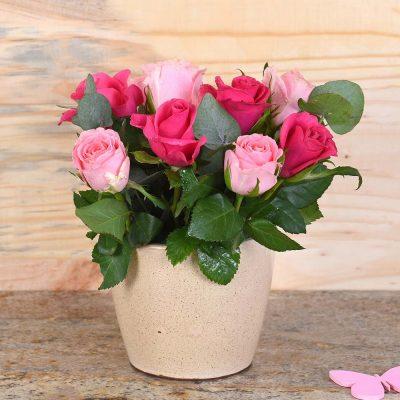 Cerise & Pink Roses in Cream Pot | Hamper World Florist