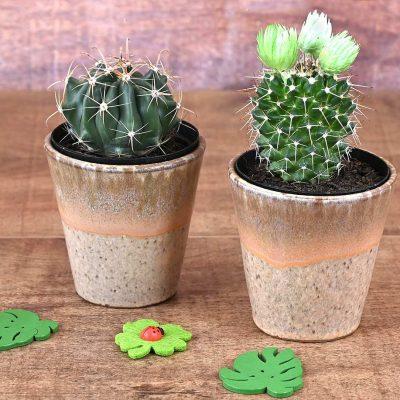 2 Cacti In Brown Pots | Hamper World