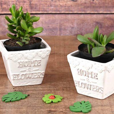 2 Succulents In White Pots | Hamper World