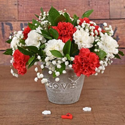 Carnations Arrangement Flowers | Hamper World